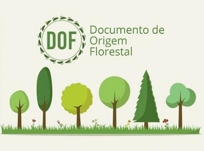 DOF -